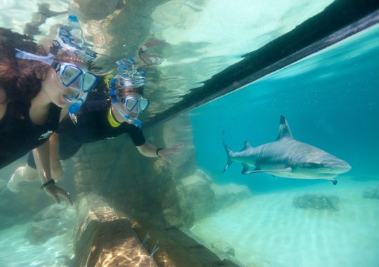 Discovery Cove Special Deal