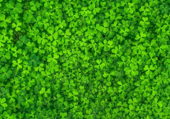 Celebrate Like the Irish on St Patricks Day, in Orlando