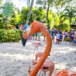 Discovery Cove® Welcomes New Pink Guests & Celebrates with Amazing Park Offer